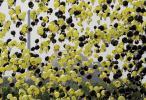 Atomkraftgegner starten am Samstag (21.05.11) rund 11.000 Luftballons vor dem voruebergehend vom Netz genommenen niedersaesischen Atomkraftwerk Unterweser. Die Ballons sollen laut dem Verein Campact e.V., der die Aktion organisiert hat, zeigen wohin eine radioaktive Wolke ziehen würde, wenn es in Unterweser zu einem Reaktorunfall oder einem Terroranschlag käme.